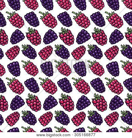 Bramble, Dewberry And Raspberry Hand Drawn Pattern Vector Illustration. Bramble Berries And Raspberr