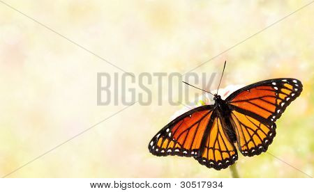 Viceroy butterfly on a dreamy light background, a business card design poster