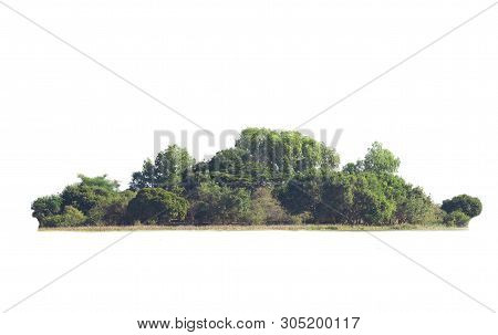 Isolated Big Tree On White Background. Tropical Trees Isolated Used For Design, Advertising And Arch