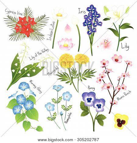 Flower Set 3. Flora Vector Collection. Botanical Illustration. Isolated On White Background.