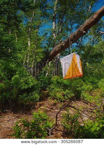 White Orange Flag Marks Checking Point For Orienteering Run Hangs On Tree In Difficult Forest And Ro