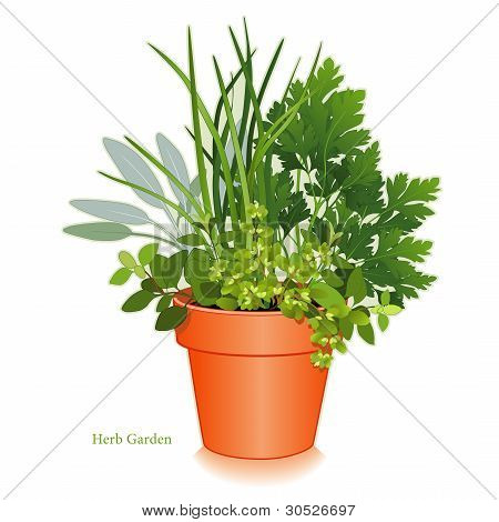 Clay flowerpot garden planter with aromatic cooking herbs, left to right: Italian Oregano, Sage, Chives, Flat Leaf Parsley, Sweet Marjoram.  EPS8 compatible. poster