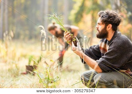 Forest worker controls the quality of pine seedling for afforestation