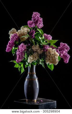 White And Purple Branches Of Lilac In Vase On Black Background. Spring Branch Of Blooming Lilac On T
