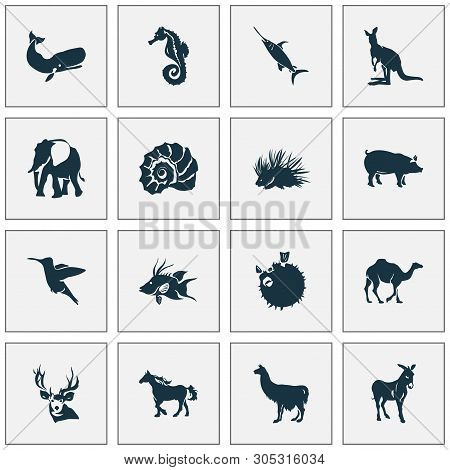 poster of Fauna icons set with hogfish, porcupine, swordfish and other joey elements. Isolated  illustration fauna icons.