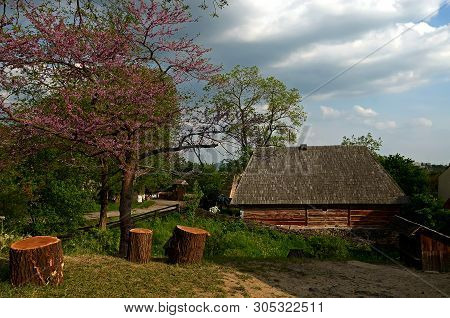 A Flowering Tree With Purple Flowers Grows Next To Wooden Stumps