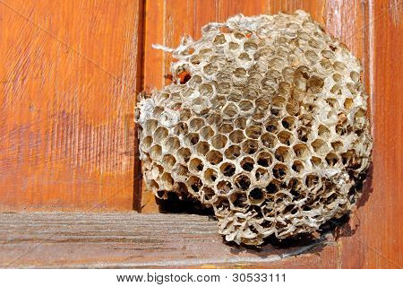 empty bee hive on a wooden window