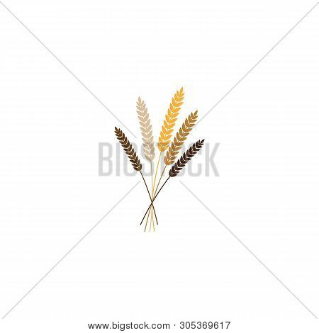 Vector Illustration Of Wheat, Rye Or Barley Ears With Whole Grain, Yellow Colorful Wheat, Rye Or Bar