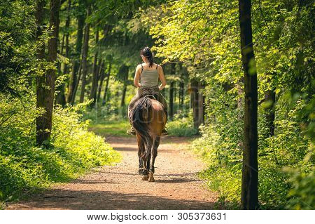 Young Rider Woman On Bay Horse In The Autumn Park At Sunset. Teenage Girl Riding Horse In Park, Shot