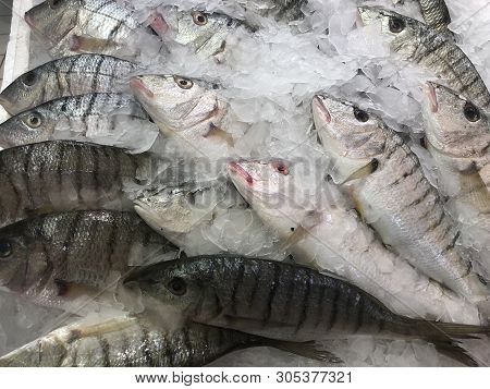 The chilled gilt-head sea breams Sparus aurata at the market counter. poster