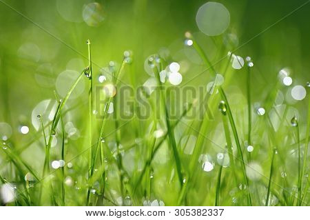 Green Nature. Beautiful Close Up Photo Of Nature. Green Grass With Dew Drops. Colorful Spring Backgr