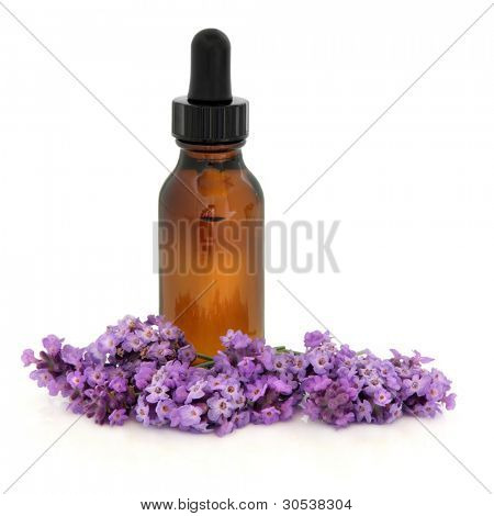 Lavender herb flower sprigs  with an aromatherapy essential oil glass bottle isolated over white background. Lavandula.
