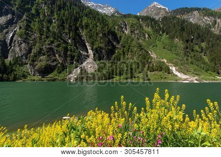 Alpine Lake Spring Summer Landscape With Yellow Flowers In Foreground Stillup Lake Austria Tyrol