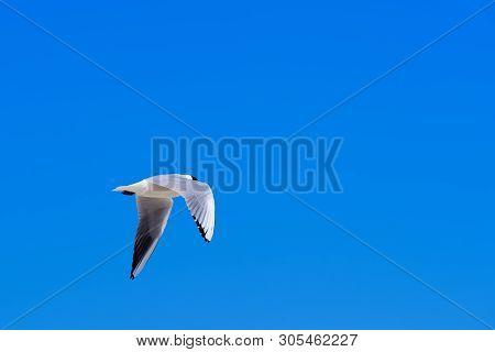Single Seagull Flying Against Clear Blue Sky