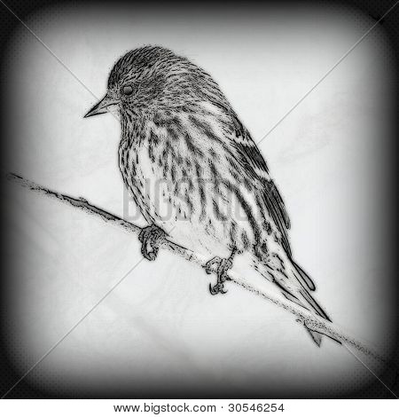 Pencil drawing enhanced photo of a tree sparrow