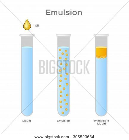 Emulsion Of Two Liquids / Oil And Water/ Immiscible Vector