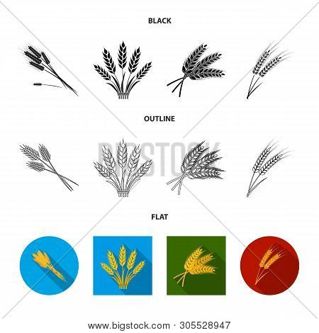 Isolated Object Of Wheat And Stalk Sign. Set Of Wheat And Grain Stock Vector Illustration.