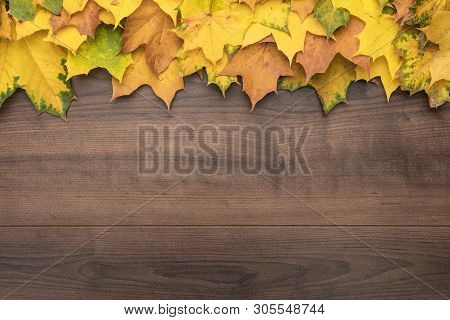 Top View Of Autumn Leaves On Brown Backdrop. Bright Yellow Autumn Leaves On Wooden Background. Autum