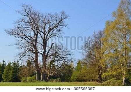 Vie Of Spring Landscape, Southern Bohemia . Czech Republic