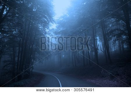 Foggy Forest, Fairy Tale Woods Or Foggy Horror Forest. Halloween Concept. Blue Colors Misty Forest.
