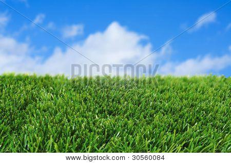 closeup of grass over the blue sky