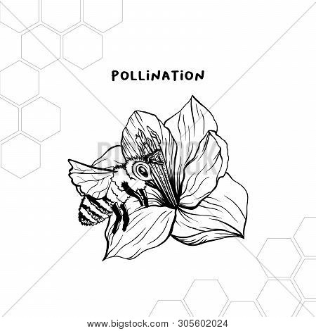 Pollination Process Hand Drawn Vector Illustration. Honey Product Store Logo, Label. Bee And Flower