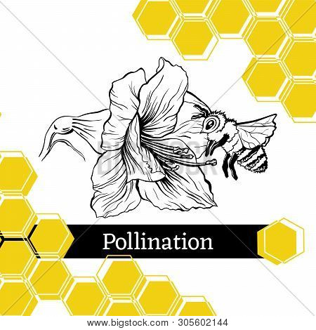 Pollination Hand Drawn Vector Illustration. Bumblebee And Blooming Flower Ink Pen Sketch. Honey Stor