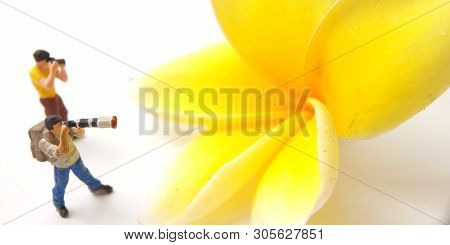 2 Mini Figure Photographer Toy Standing Taking Picture A Big Yellow White Beautiful Frangipani Or Pl