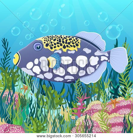 Triggerfish Fish Clown At The Bottom Of Sea With Colorful Algae Drawing, Underwater World Background
