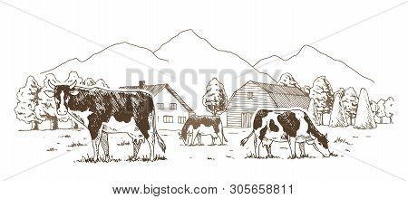Dairy Farm. Cows Graze In The Meadow. Rural Landscape, Village Vintage Sketch.