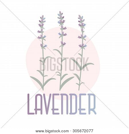 Lavender. Vector Concept Image In Provence Style. Eps 10