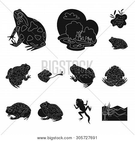 Isolated object of fauna and reptile sign. Set of fauna and anuran stock vector illustration. poster
