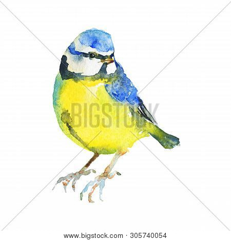 Watercolor titmouse. Hand drawn bird on white background. Painting ornithological illustration poster