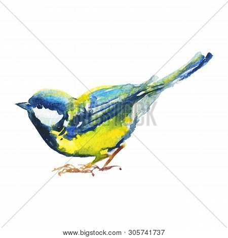 Hand drawn titmouse, side view. Watercolor bird on white background. Painting ornithological illustration poster