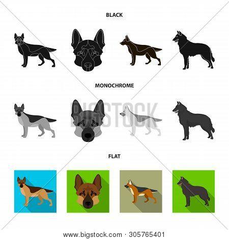Vector Design Of Sheepdog And Sheltie Symbol. Collection Of Sheepdog And Shepherd Stock Symbol For W