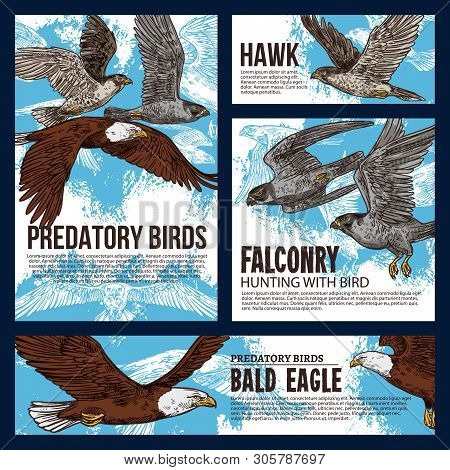 Falconry hunting sport, wild predatory birds hunt sketch posters. Vector eagles, falcons and predatory vultures on sky hunt, bird of prey hawk and bald eagle in traditional falconry hunting poster