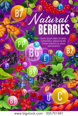 Berries With Natural Organic Vitamins And Minerals. Vector Healthy Berry Fruits, Sea Buckthorn Or Ho