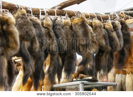 The Sable Fur Skins At The Fur Exhibition