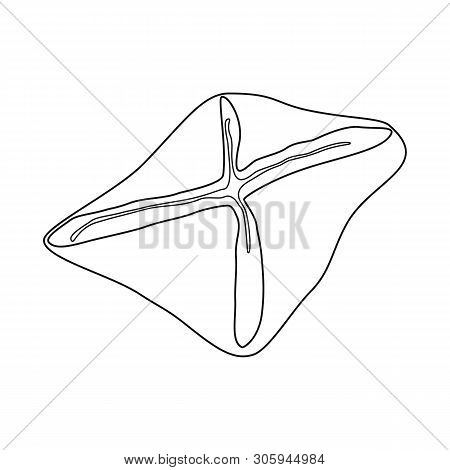 Isolated Object Of Manti  And Jiaozi Symbol. Set Of Manti  And Dough Vector Icon For Stock.