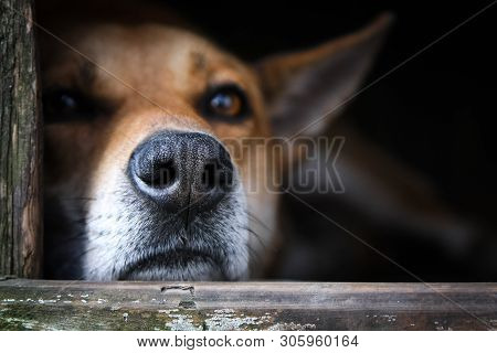 Sad view of a lonely red dog lying in the kennel - an old wooden house poster