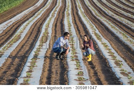 Farmer Woman With Tablet And Agronomist Talking In Vegetable Field With Foil On Soil