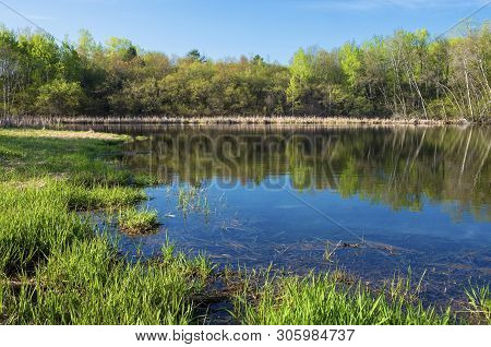 Marsh Grasses And Woodlands Surrounding Pond With Reflections In Salem Hills Park Inver Grove Height
