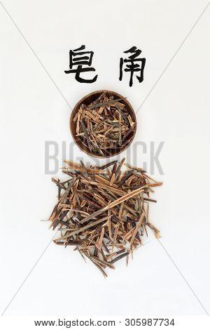 Honeylocust herb used in traditional chinese herbal medicine, has anti inflammatory & anti bacterial properties. Calligraphy script translation reads as Chinese honeylocust. Zao jia. Gleditsia si