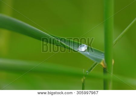 Single water drop on a grass blade