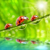Funny picture of the ladybugs family running on a grass bridge over a spring flood. poster