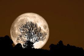 Super Corn Planting Moon Back Silhouette Dry Branch Tree