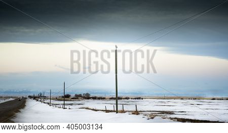 A Snowy Owl Sits Perched On Top Of A Power Pole Along A Hi Way Facing The Distant West Slopes Of The