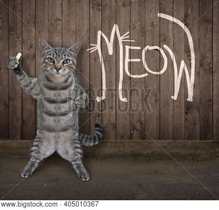 A Gray Cat Wrote Meow In Chalk On The Wooden Fence.