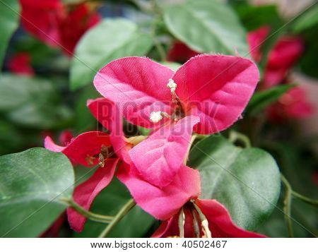 Bougainvillea Flower, Pink Color, Fake, Made Of Fabric