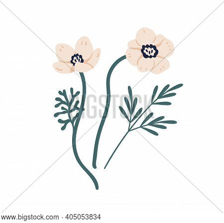 Gorgeous Blossomed Anemones With Green Twigs Isolated On White Background. Botanical Floral Element.